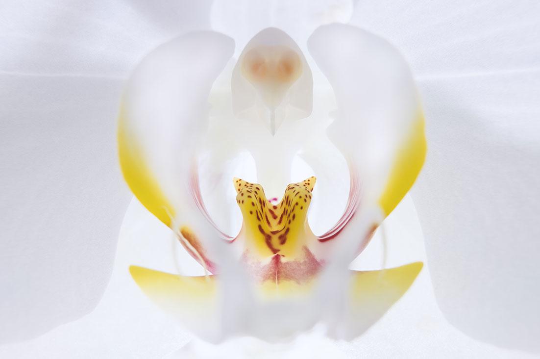 Orchid macro - Heart of orchid by Tiziano L. U. Caviglia